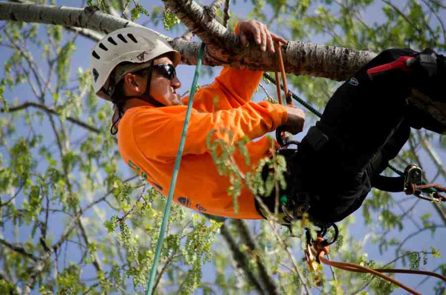 AZ Community Tree Council Inc - Tree Climbing Championship
